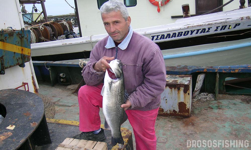 POF com πολλά ψάρια ραντεβού μέρος POF